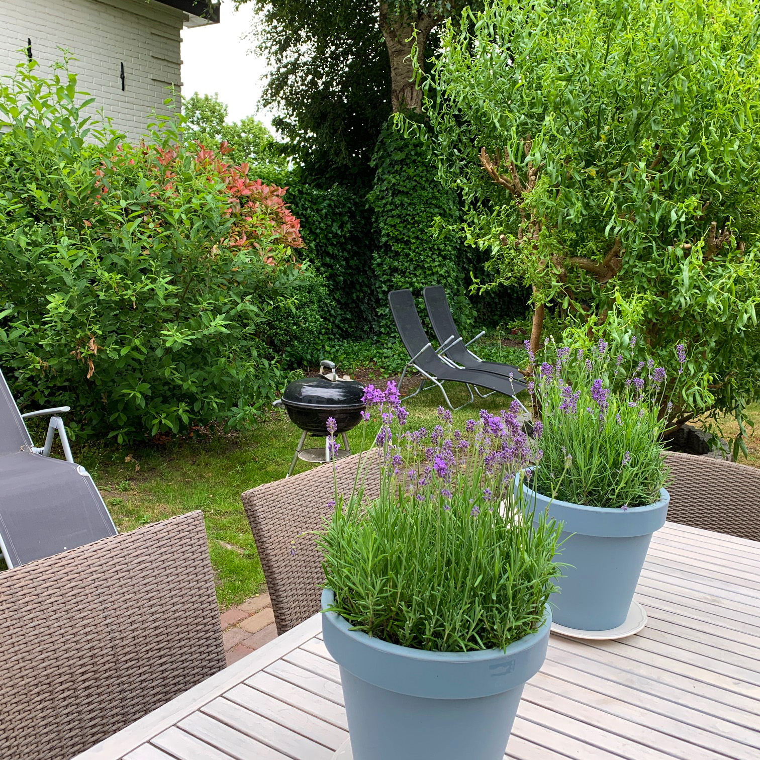 View garden with sun seats and bbq holiday home near Amsterdam